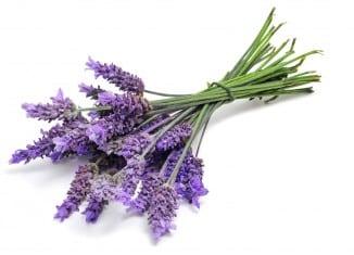 recette-parfum-floral