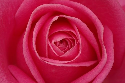 recette-parfum-rose